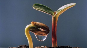 La stabilità di un albero dipende dalla forza delle sue radici