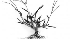 La Gramigna, cresce in primavera. Ecco il numero 0!